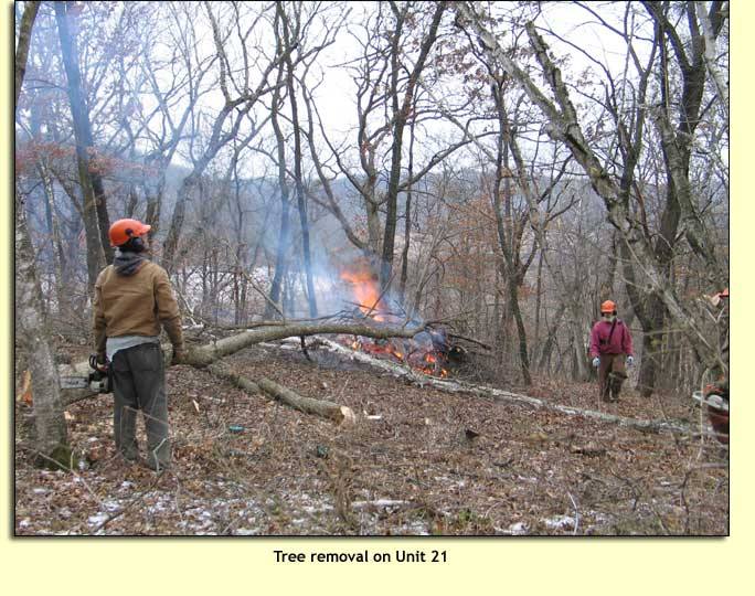 During The Main Period Of Tree Removal From 2003 2007 All Restoration Work Was Funded By Savanna Oak Foundation Inc